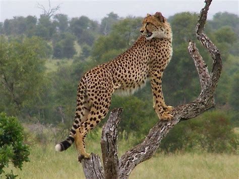 Kruger National Park South Africa – For the Experience of