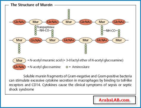 The Morphology and Fine Structure of Bacteria