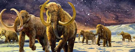 Biggest Elephant - The Steppe Mammoth (10 Tons)